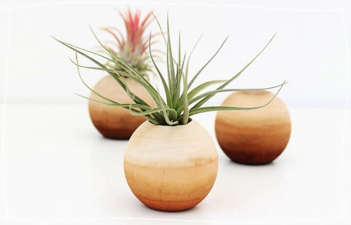 diy air plant, for holiday gifts, how to crafts
