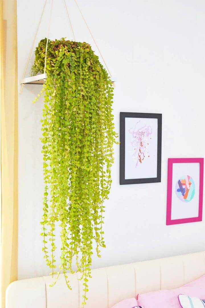Cute DIY Picture Frame Plant Holder
