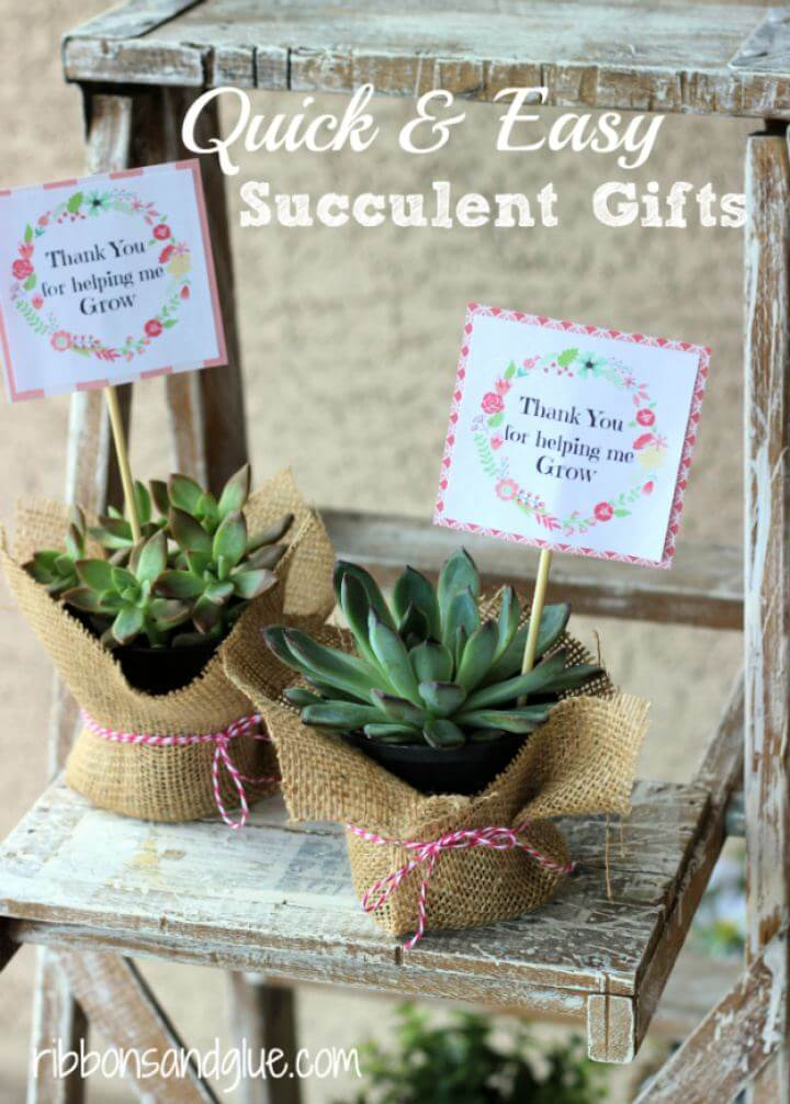 Quick And Easy DIY Succulent Gifts Tutorial