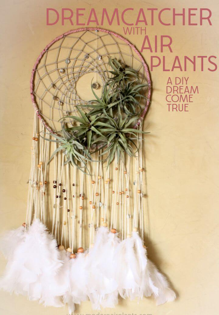 Make Your Own DIY Dreamcatchers Air Plants
